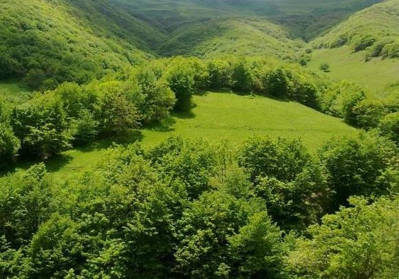 جنگل چیچکلی